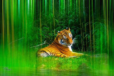 Tigers Misty Lair Art Print by Glenn Feron