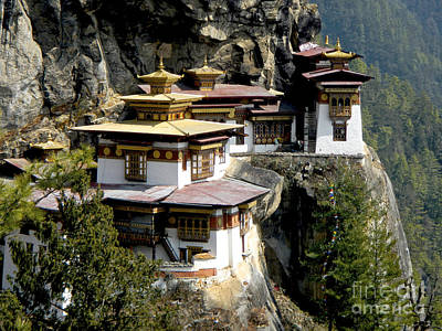 Photograph - Tiger's Nest All Profits Go To Hospice Of The Calumet Area by Joanne Markiewicz