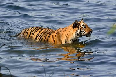 Tigress Of The Lake Art Print