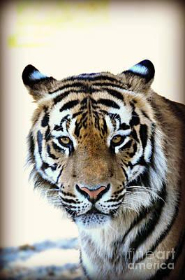 Tigris Art Print by Mindy Bench