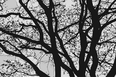 Wood Digital Art - Tilia Night Silhouette by Yevgeni Kacnelson