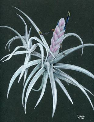 Painting - Tillandsia Chiapensis by Penrith Goff