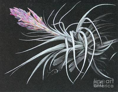 Painting - Tillandsia Turriformis by Penrith Goff