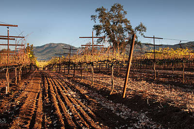 Tilling The Vineyards Art Print by Kent Sorensen
