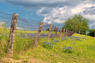 Tilted Fence Art Print