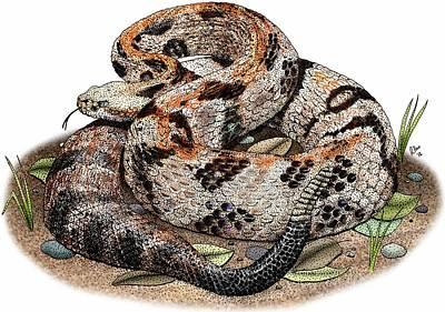 Timber Rattler Photograph - Timber Rattlesnake by Roger Hall