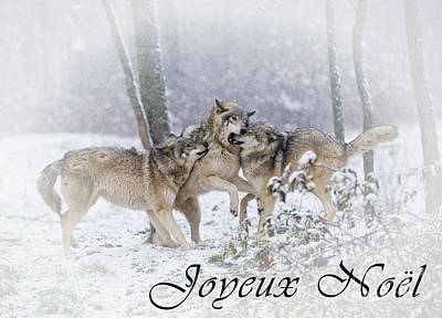Photograph - Timber Wolf Christmas Card French 14 by Wolves Only