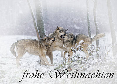 Photograph - Timber Wolf Christmas Card German 14 by Wolves Only