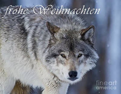 Photograph - Timber Wolf Christmas Card German 18 by Wolves Only