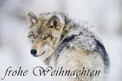 Photograph - Timber Wolf Christmas Card German 19 by Wolves Only