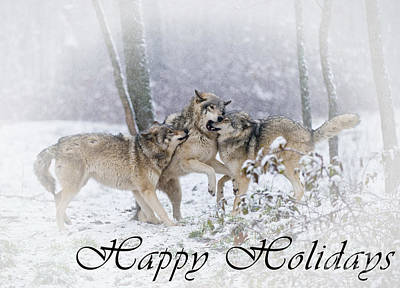 Photograph - Timber Wolf Holiday Card 14 by Wolves Only