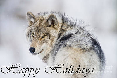 Photograph - Timber Wolf Holiday Card 19 by Wolves Only