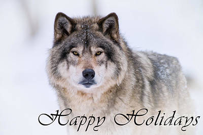 Photograph - Timber Wolf Holiday Card 20 by Wolves Only
