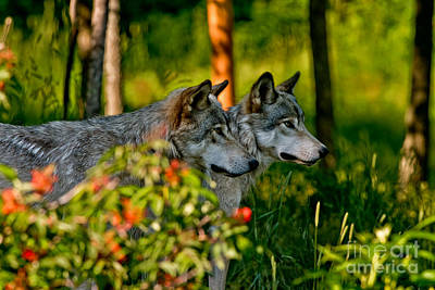 Photograph - Timber Wolf Pictures 193 by Wolves Only