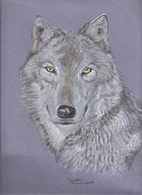 Pastel - Timber Wolf Portrait by Sandra Muirhead