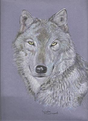 Timber Wolf Portrait Art Print