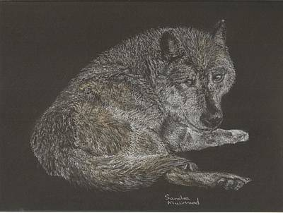 Pastel - Timber Wolf by Sandra Muirhead