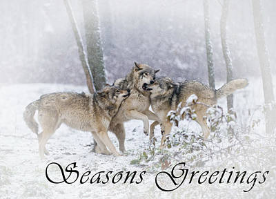 Photograph - Timber Wolf Seasons Greetings Card 14 by Wolves Only