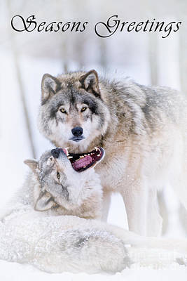 Photograph - Timber Wolf Seasons Greetings Card 16 by Wolves Only