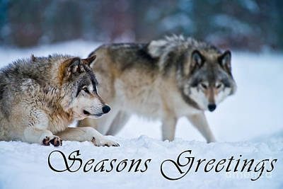 Photograph - Timber Wolf Seasons Greetings Card 17 by Wolves Only