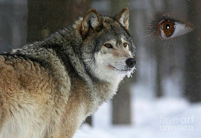 Timber Wolf Watch Art Print by Inspired Nature Photography Fine Art Photography