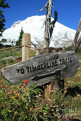 Timberline Trail Art Print by Cari Gesch