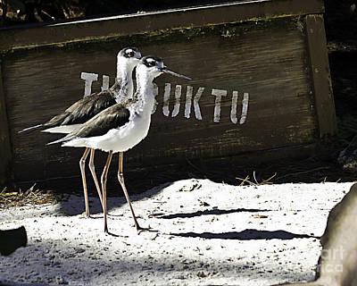 Photograph - Timbuktu Two by Ken Frischkorn