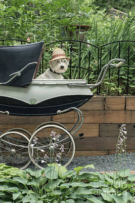 Stroller Photograph - Time For A Stroll by Edward Fielding