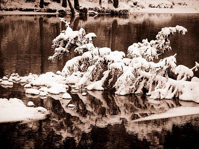 Photograph - Time For Reflection by Ramona Johnston