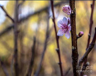 Photograph - Time To Bloom by Serene Maisey
