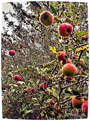 Photograph - Time To Pick The Apples by Garren Zanker