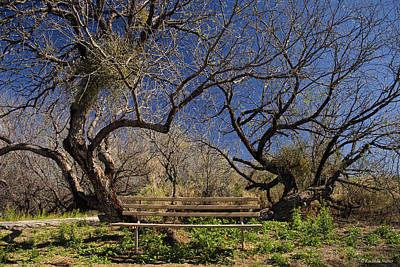 Photograph - Time To Sit Among The Trees by Lucinda Walter