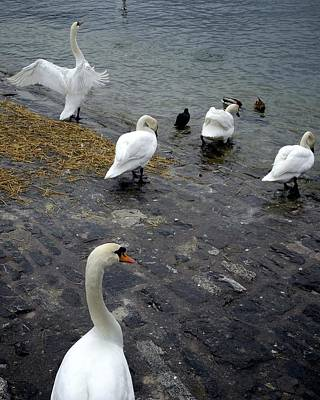 Vevey Photograph - Time To Take A Dip by Colleen Williams