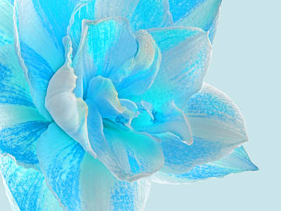 Amarylis Photograph - Timeless Beauty In Blue by Gill Billington
