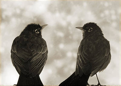 Photograph - Timeless Robins by Lisa Knechtel
