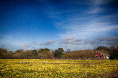 Mustard Photograph - Times Like These by Laurie Search