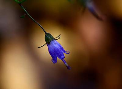 Nature Photograph - Tinker Bell by Lisa Vaccaro
