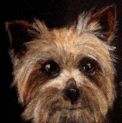 Dog Close-up Painting - Tinker by Carol Russell