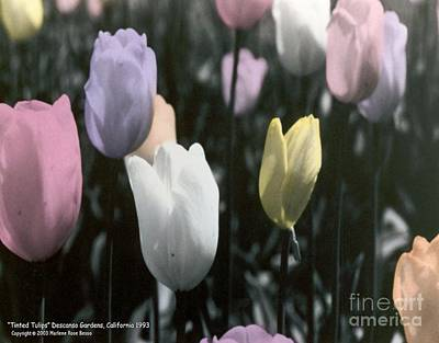 Mixed Media - Tinted Tulips by Marlene Rose Besso