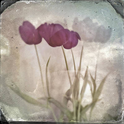 Photograph - Tintype Tulips 70 by Mikael Carstanjen