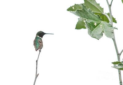 Photograph - Tiny Beauty by Cheryl Baxter