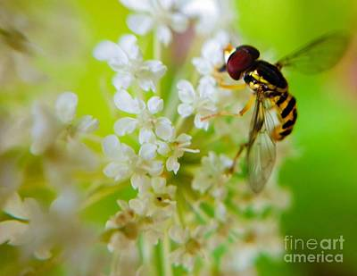 Photograph - Tiny Bee On Wildlflowers by Peggy Franz