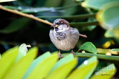 Photograph - Tiny Bird Hanging Out - People Watcher by Michelle Constantine