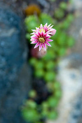 Art Print featuring the photograph Tiny Blossom by Erin Kohlenberg