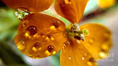Photograph - Tiny Dew Drop On Wild Flower Macro by Peggy Franz