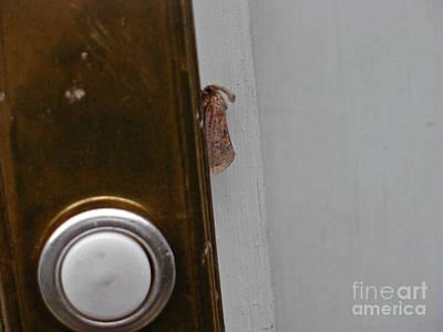 Tiny Doorbell Moth Art Print