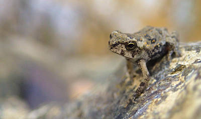 Photograph - Tiny Frog by Tyler Lucas