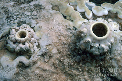 Mammoth Spring Photograph - Tiny Fumaroles by Gregory G. Dimijian, M.D.