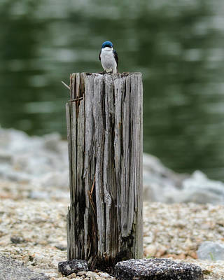 Photograph - Tiny Guardian by Jai Johnson