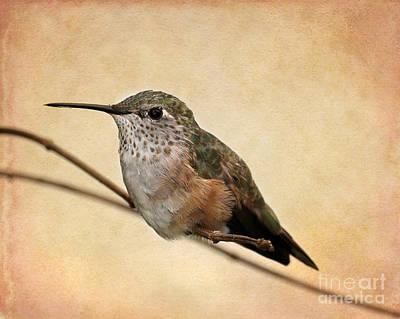 Photograph - Tiny Hummingbird Resting by Sabrina L Ryan